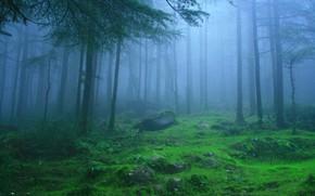 Картинка лес, деревья, природа, туман, камни, Индия, Himachal Pradesh