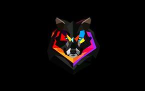 Обои животное, обои, краски, волк