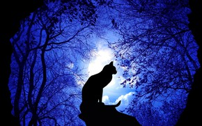 Картинка forest, night, cat, illustration, rendeting