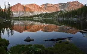 Картинка лес, горы, отражение, скалы, берег, ели, водоем, симметрия