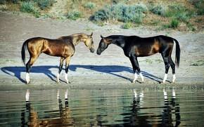 Картинка озеро, берег, лошади