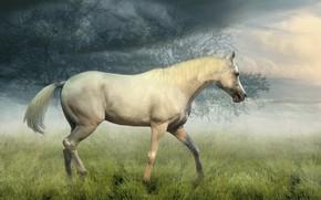 Картинка поле, белый, небо, трава, взгляд, облака, деревья, природа, туман, конь, коллаж, лошадь, обработка, утро, профиль, …
