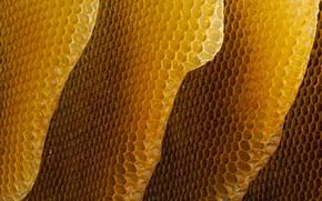 Картинка соты, мёд, пчёлы
