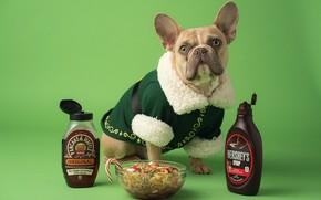 Картинка еда, собака, Рождество, костюм, Новый год, миска, сидит, зеленый фон, французский бульдог, шоколадный сироп