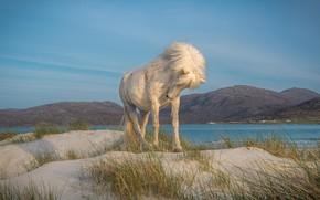 Картинка песок, белый, трава, горы, природа, поза, река, конь, холмы, берег, лошадь, дюны, грива, стоит, Исландия, ...