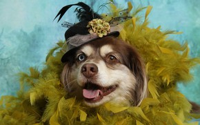 Картинка собака, перья, шляпка