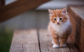 Картинка кошка, взгляд, поза, котенок, фон, доски, рыжий, лестница, ступени, котёнок