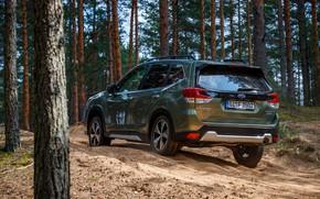 Картинка Subaru, кроссовер, хвойный лес, Forester, 2019