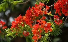 Картинка зелень, листья, свет, цветы, ветки, яркие, размытие, оранжевые, цветение, боке, оранжево-красные