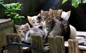 Картинка лето, котята, малыши, компания, друзья, много, тусовка, ребятишки из деревни Новые Васюки