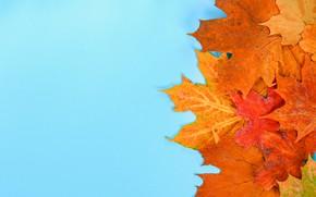 Картинка осень, листья, фон, colorful, клен, autumn, leaves, осенние, maple