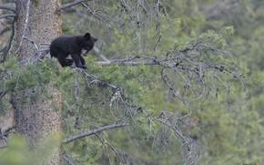 Картинка лес, природа, медвежонок, DUELL ©