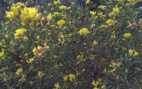 Картинка тайна, полевые цветы, летний вечер, драматичный сюжет