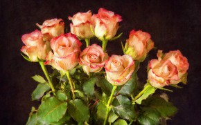 Картинка темный фон, розы, букет, мазки