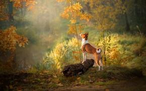 Обои осень, лес, трава, взгляд, листья, свет, деревья, ветки, природа, поза, туман, озеро, пруд, парк, настроение, ...