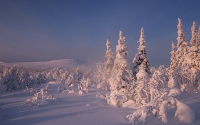 Картинка зима, небо, снег, деревья, ели, сугробы, Россия, Главный Уральский хребет