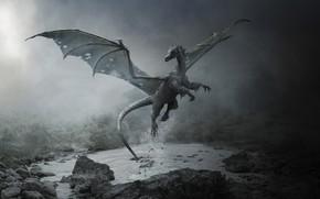 Картинка серость, дракон, сумерки