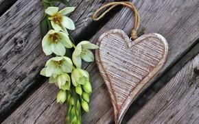 Картинка цветок, Праздник, сердечко, день влюбленных