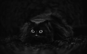 Картинка кот, чёрный фон, чёрный кот