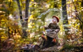 Картинка лес, лист, дождь, ребёнок