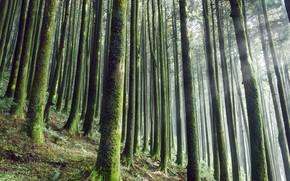 Картинка лес, природа, мох