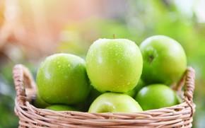 Картинка капли, яблоки, еда, зеленые, фрукты, корзинка, боке