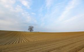 Картинка поле, природа, дерево, пашня