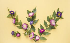 Картинка листья, цветы, фон, декор