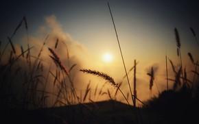 Картинка Солнце, Природа, Восход, Трава, Растение, Утро, Рассвет, Силуэт, Растения, Nature, Sun, Sunrise, Dawn, Morning, Flora, …