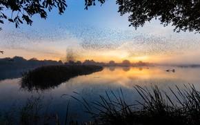 Картинка трава, деревья, полет, закат, птицы, ветки, туман, озеро, пруд, отражение, рассвет, берег, листва, вид, стая, …