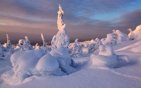 Картинка зима, снег, деревья, закат, ели, Кольский полуостров, Максим Евдокимов, Кандалакша