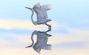 Обои вода, полет, отражение, птица, цапля