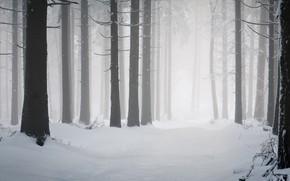 Картинка зима, лес, снег, сугробы, сосны, стволы деревьев