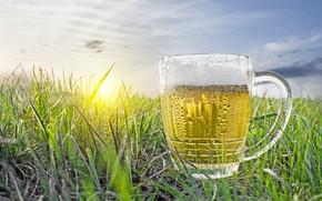 Картинка поле, небо, трава, солнце, рассвет, пиво, кружка