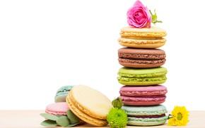 Картинка роза, печенье, разноцветные, макаруны