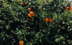 Картинка green, orange, mandarin