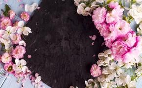 Картинка цветы, весна, розовые, white, wood, pink, blossom, flowers, spring