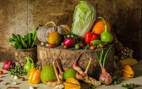 Картинка урожай, тыква, натюрморт, овощи, autumn, still life, pumpkin, vegetables, harvest
