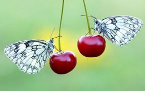 Картинка макро, бабочки, цветы, насекомые, вишня, ягоды, фон, бабочка, две, пара, красные, белые, парочка, дуэт, черешня, …