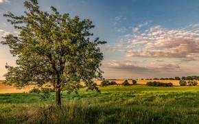 Картинка дерево, фото, поле, облака
