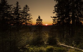 Картинка лес, солнце, закат, ветки, вечер, ели, сосны, бревно