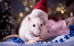Картинка взгляд, свет, красный, поза, фон, праздник, еда, лапки, размытие, огоньки, мышь, мышка, мордочка, Новый год, …