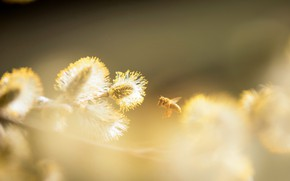 Картинка природа, пчела, весна
