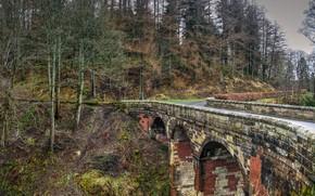 Картинка дорога, лес, мост