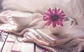 Картинка цветок, стиль, книги, лепестки, чашки, кружки, остеоспермум