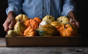 Картинка hands, pride, vegetables, harvest, farmer