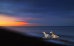 Картинка море, волны, небо, свет, закат, природа, темный фон, синева, берег, две, кони, обработка, лошади, купание, …