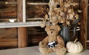 Картинка осень, стекло, листья, детство, стиль, ретро, стол, фон, игрушка, букет, камера, медведь, сухой, окно, мишка, …