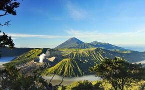 Картинка небо, солнце, деревья, горы, ветки, туман, долина, Индонезия, вулканы, Mount Bromo, Surabaya