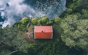 Картинка лес, вода, домик, вид сверху